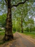 Hyde Park Trail lizenzfreie stockbilder