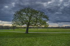 Hyde park tree, London Royalty Free Stock Image