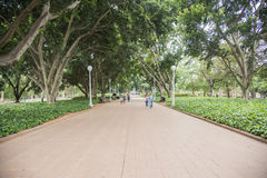 Hyde Park Walkers. SYDNEY,NSW,AUSTRALIA-NOVEMBER 19,2016: Happy couple walking, dog walking and bench relaxation at Hyde Park in Sydney, Australia Stock Photography