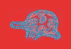 Hydra ett enkelt sötvattens- djur royaltyfria bilder