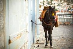 Free Hydra S Donkey Stock Photos - 45924673