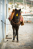 Hydra's Donkey Royalty Free Stock Image
