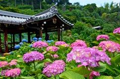 Hydrangea, ιαπωνικός ναός Στοκ Εικόνες