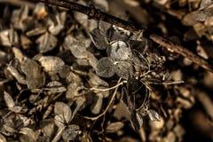 hydrangea ξηρά λουλούδια Στοκ φωτογραφία με δικαίωμα ελεύθερης χρήσης