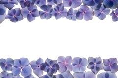 hydrangea πλαισίων λουλουδιών Στοκ φωτογραφίες με δικαίωμα ελεύθερης χρήσης