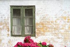 Hydrangea στη θαυμάσια κόκκινη άνθιση Στοκ φωτογραφία με δικαίωμα ελεύθερης χρήσης