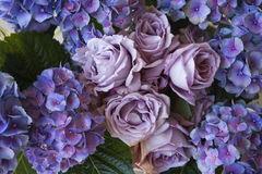 Hydrangea & τριαντάφυλλα Στοκ Εικόνες