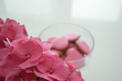 hydrangea Photographie stock