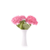 Hydrangea. Studio shot of some pink hydrangea in a vintage white vase. Isolated. White background Royalty Free Stock Photos