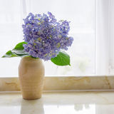 hydrangea stock foto