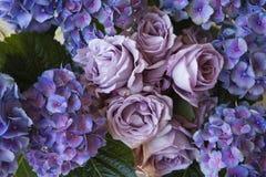 Hydrangea & rose Fotografia Stock