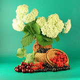 Hydrangea And Berries. Royalty Free Stock Image