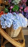 Hydrangea in basket Stock Images