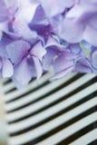 Hydrangea bleu Photographie stock