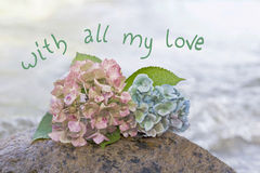 hydrangea blossoms at a beach stone, farewell scene Royalty Free Stock Photography