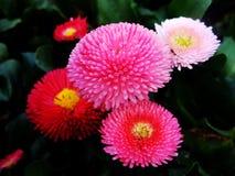 hydrangea Blumen Lizenzfreie Stockbilder