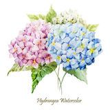 Hydrangea bouquet Stock Photos