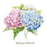 Hydrangea bouquet. Beautiful watercolor vector hydrangea bouquet different colors Stock Photos