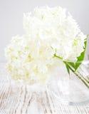 Hydrangea bouquet Stock Images