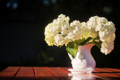 Hydrangea bouquet of flowers in a white jug. Flowers on a wooden table, are lit with the sunset sun against the background of trees Stock Photography