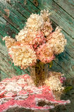 Hydrangea bouquet Royalty Free Stock Photography