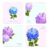Hydrangea Cards Set. Romantic hydrangea paper cards set with blossoming flowers isolated vector illustration Royalty Free Stock Photo