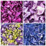Hydrangea collage texture stock photography