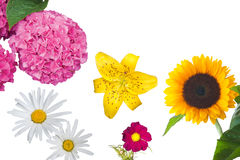 Hydrangea, Daisies, a Yellow Tiger Lily, a Magenta Anemone Coronaria and a Sunflower Isolated Stock Photo