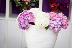 Hydrangea deco royalty free stock image