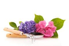 Hydrangea e ferramentas de jardinagem Foto de Stock Royalty Free