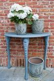 Hydrangea et bacs avec la table photo stock