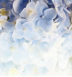 Hydrangea floral background Royalty Free Stock Photos