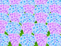 Hydrangea flower background Royalty Free Stock Photos