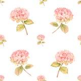 Hydrangea flower in bloom - seamless pattern Stock Photos
