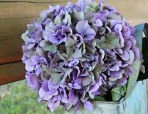 Hydrangea, Flower, Blossom, Bloom Royalty Free Stock Image