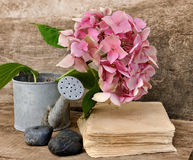 Hydrangea flower and book Stock Images