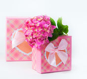 Hydrangea flower and gift box Royalty Free Stock Images