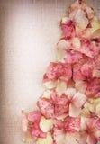 Hydrangea flower petals Royalty Free Stock Photos