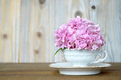 Hydrangea flower in tea cup Royalty Free Stock Images