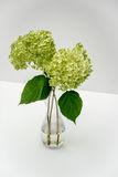 Hydrangea Flower in a Vase Royalty Free Stock Photos