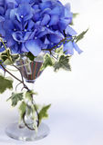 Hydrangea flowers royalty free stock photography