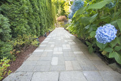 Hydrangea Flowers Along Paver Walkway. Hydrangea Flowers Blooming Along Concrete Pavers Brick Walkway Stock Photography