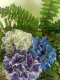 multicolored stock photo
