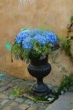 Hydrangea flowers.Hortensia. Hydrangea flowers in black vase Stock Images