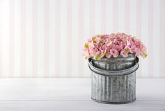 Hydrangea flowers in a metal bucket Stock Images