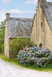 Hydrangea flowers near typical old breton houses Royalty Free Stock Photos