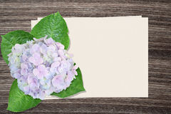 Hydrangea flowers and and paper on wood background Royalty Free Stock Image