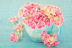Hydrangea flowers Royalty Free Stock Image
