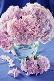 hydrangea flowers Stock Photos