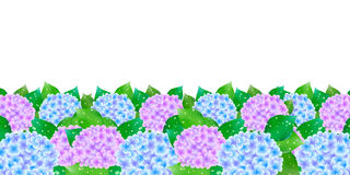 Hydrangea flowers rainy season flag Stock Image